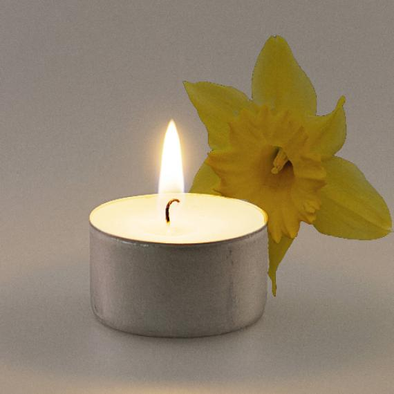 Daffodil Scented Tealights